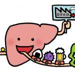 肝臓のイラスト