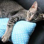 抱き枕で快眠「疲労」による汗からの強烈な刺激臭を解決